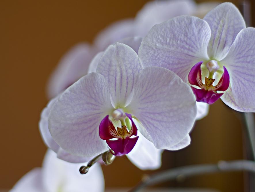 Como plantar orquídea em vasos