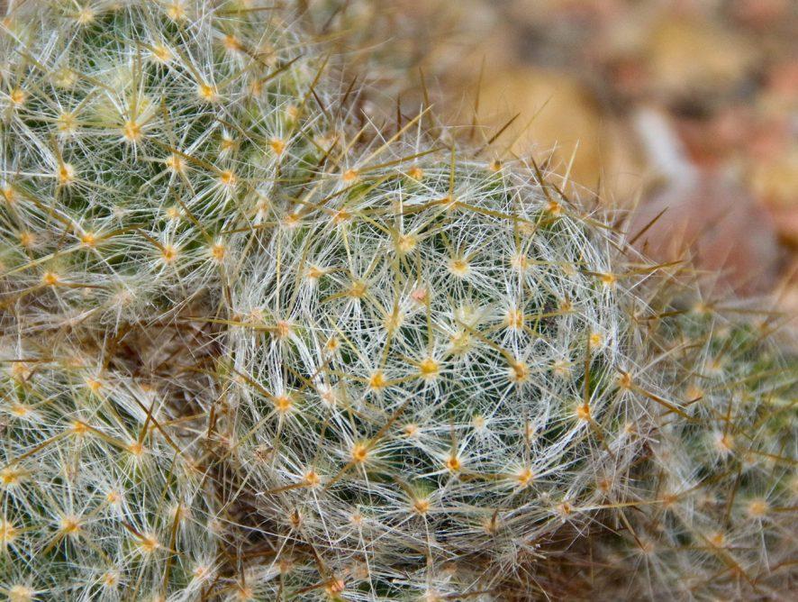 As plantas ideais para solo seco