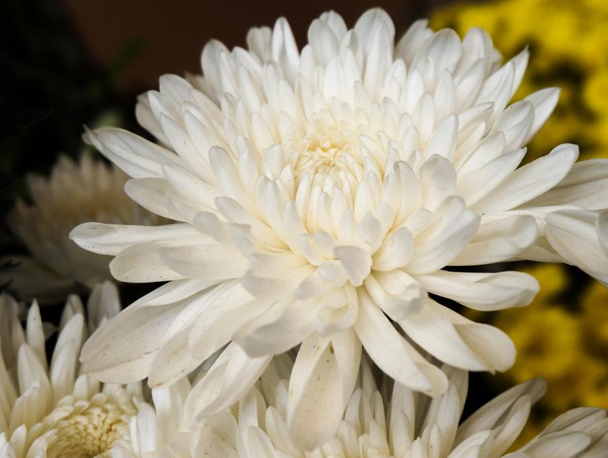 Flores que não duram muito tempo