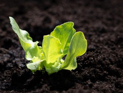 O que plantar na horta durante o outono