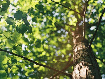10 dicas para acertar no plantio de árvores