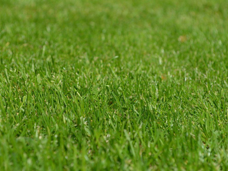 Tipos de grama e cuidados necessários