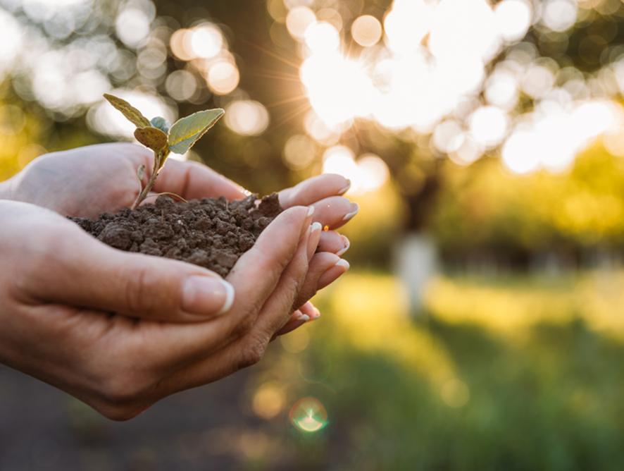 O que podemos fazer para cuidar do meio ambiente?