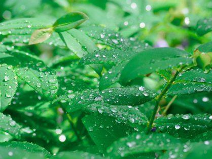 Como cuidar do seu jardim em épocas chuvosas