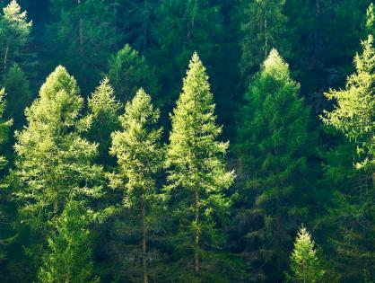 Motosserras, manejo sustentável e desmatamento