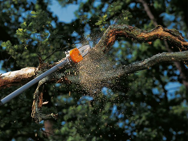 Poda de árvores adultas: quando e como fazer