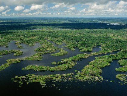 Ações para ajudar a conservar a Amazônia