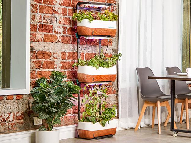 Jardim vertical: como ter essa tendência na sua casa