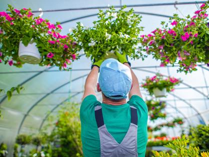 Como profissionalizar o serviço de jardinagem?