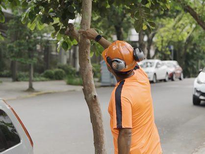 4 dicas para podar árvores
