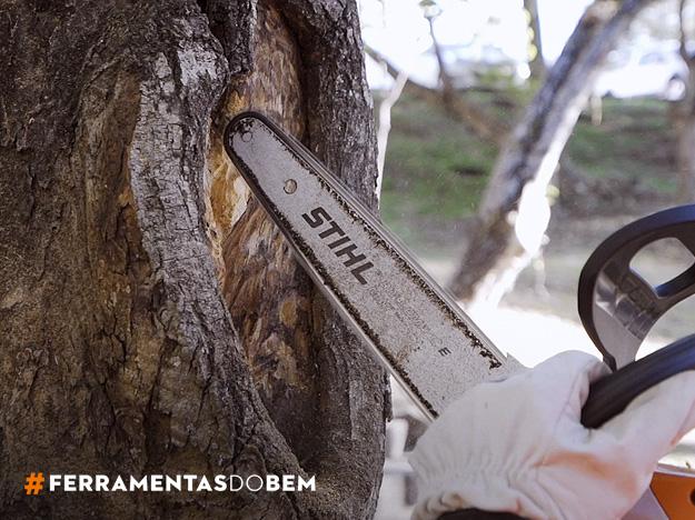 Como cuidar da saúde da árvore com uma motosserra