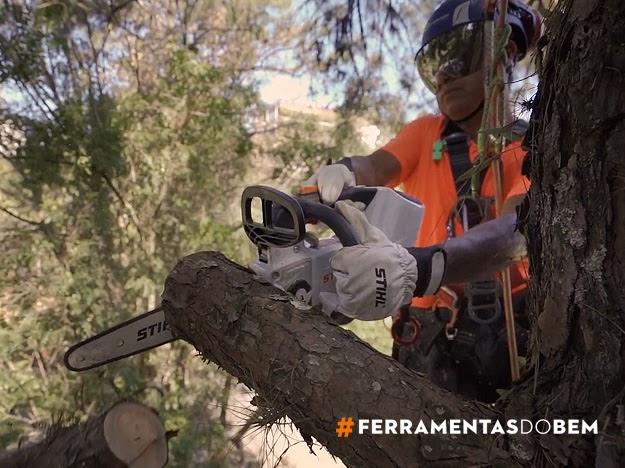 Antes do temporal: como evitar desastres com árvores