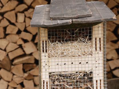 Como construir um hotel para insetos e pequenos animais