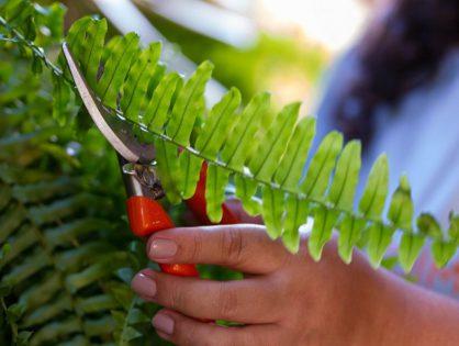 Como limpar a sua tesoura de jardinagem