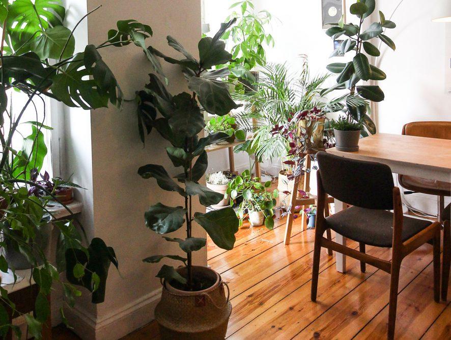 Como escolher espécies para uma urban jungle?
