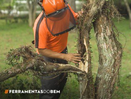 Depois do temporal: o que observar e fazer com as árvores danificadas, com Sydney Brasil