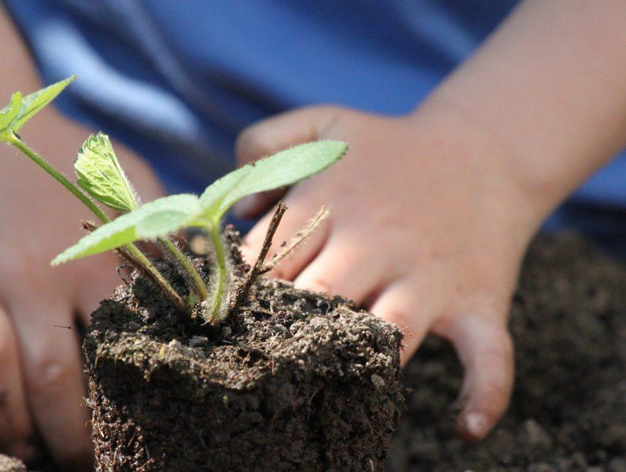 Jardim agroecológico: o que é e como ter um em casa