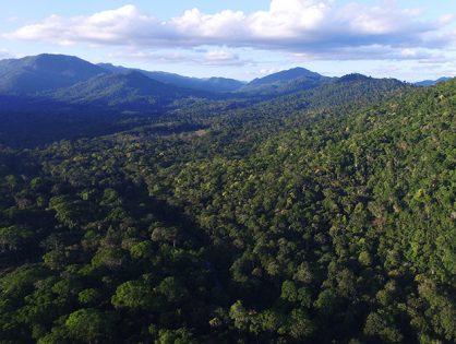 O que é manejo florestal sustentável