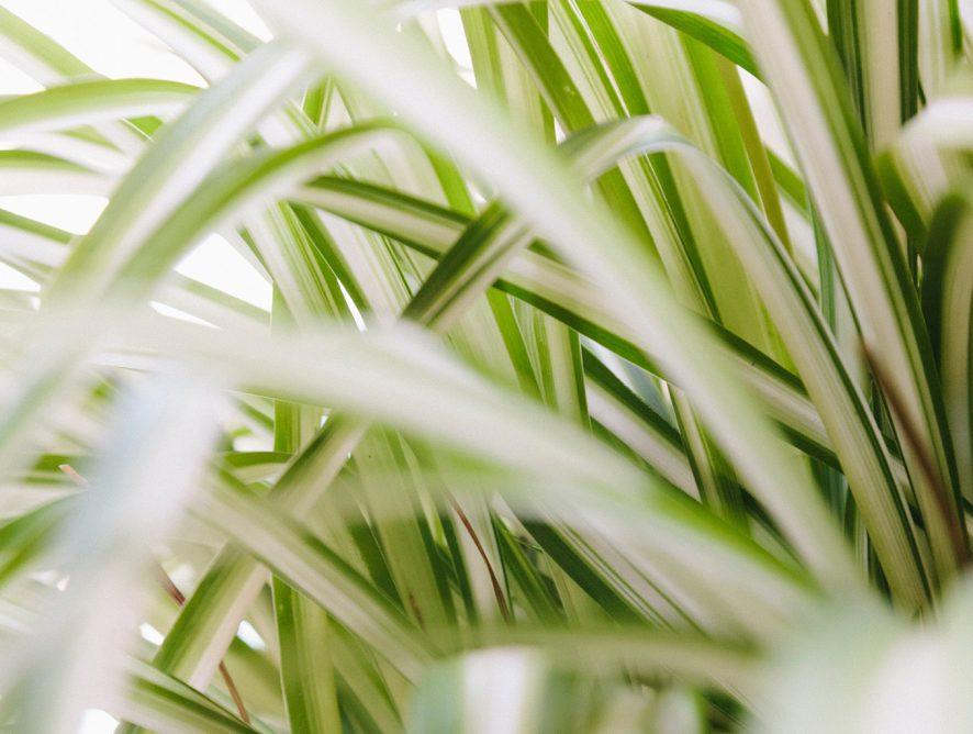 5 plantas indicadas para locais secos
