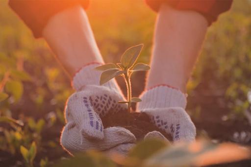 Traga a natureza para a sua vida na primavera